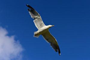 Bild: Freiheit